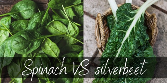 Spinach VS Silverbeet - Main Differences & How To Tell Them Apart -  Foodiosity