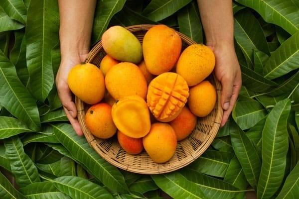 Mangoes 101 | Sukhi's