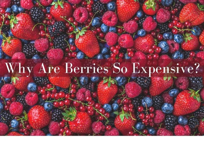 C:\Users\Pooja\Downloads\Why Are Berries So Expensive.jpg