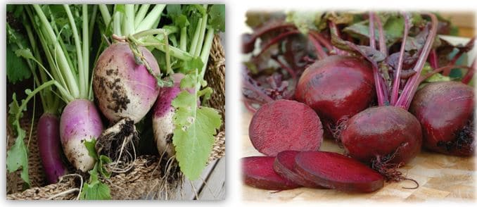 Difference Between: Beets and Turnips – BLOGS