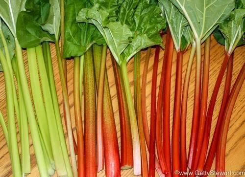 7 Rhubarb FAQs You Need to Know - Getty Stewart