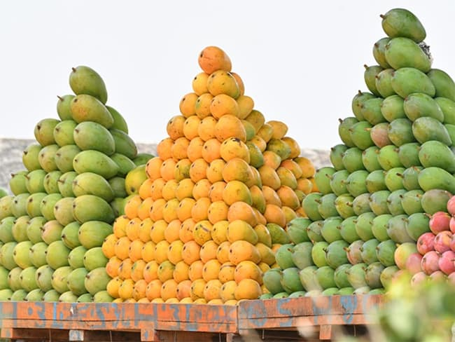 The mango war! The 'aam' party still can't bridge the regional divide - The  Economic Times