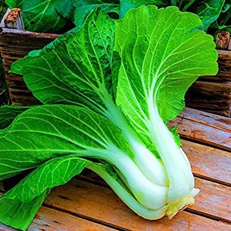 Nayva germination Pak Choi Bok Choy Vegetables Seeds F1 Hybrid Pack For  Your Home Plant and Gardening This Seeds Prepared Like Organic : Amazon.in:  Garden & Outdoors