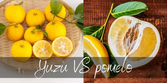 Pomelo VS Yuzu - How to tell them apart - Foodiosity