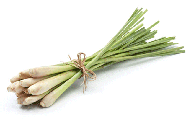 5 things that you can do with lemongrass at home - Farmizen