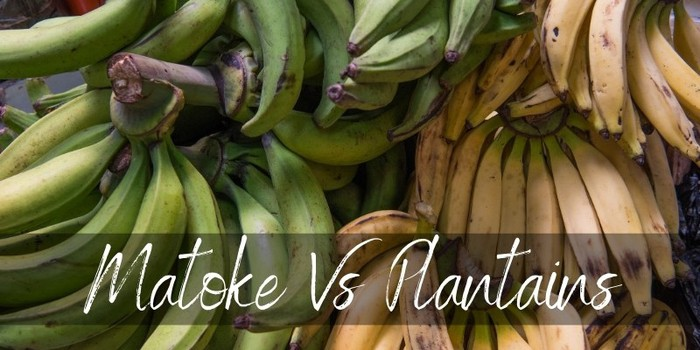 Matoke Vs Plantains - Here's How Different They are - Foodiosity