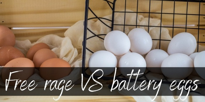 Battery VS Free Range Eggs - Main Differences Between Them - Foodiosity
