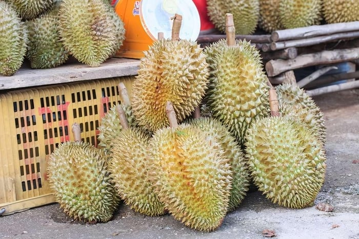 The same is fruit, why is durian so expensive?After watching the picking,  netizens: If you don't throw it well, you will have a headshot - iNEWS