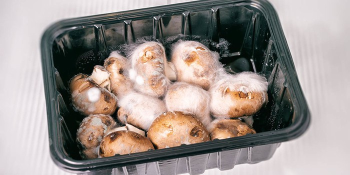How Long Do Mushrooms Last? Everything You Need To Know - GroCycle