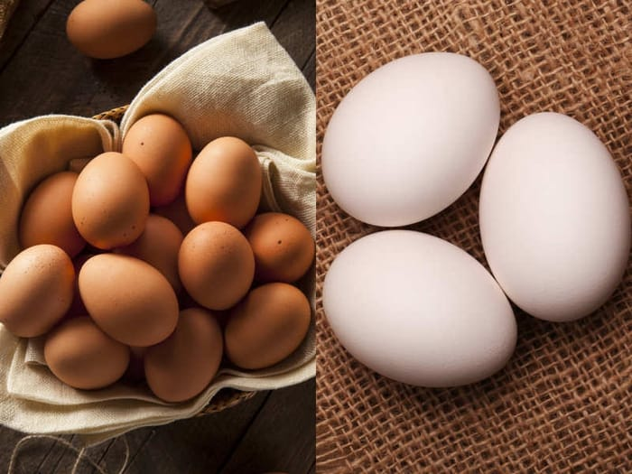 White eggs vs brown eggs: Which is healthier? - Times of India