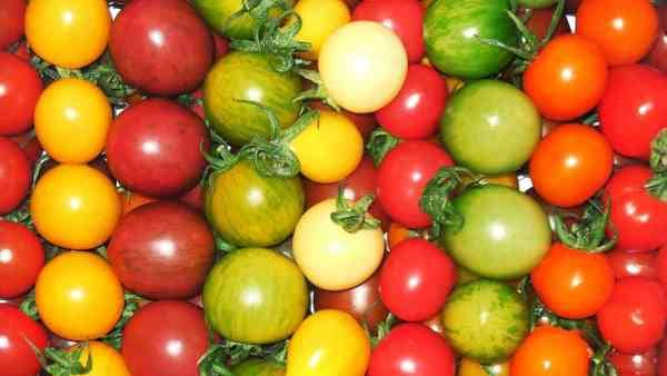 List of Hybrid Tomato Varieties from A to Z - Gardening Channel